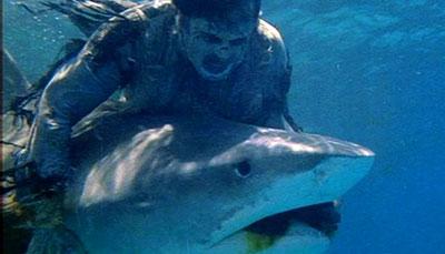 zombie_vs_shark