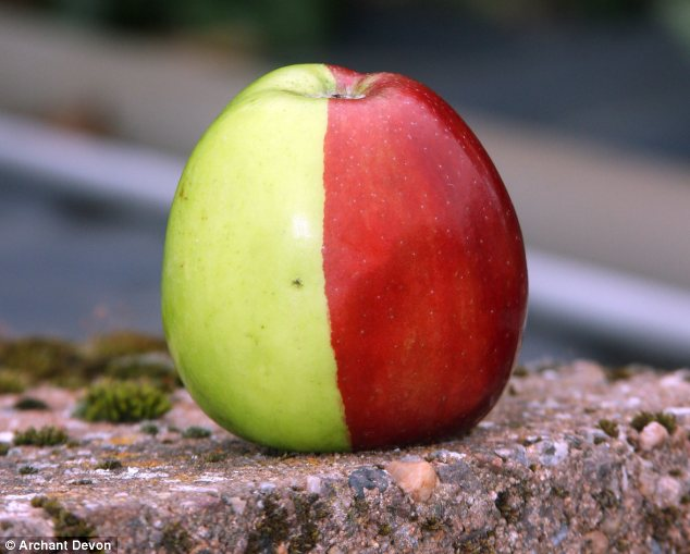 bi-colored-apple