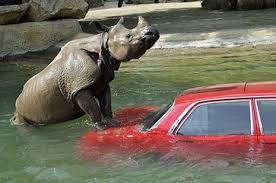 rhino2
