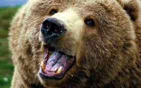 """I googled """"Train Accident"""" and got depressed so here's a happy bear!"""