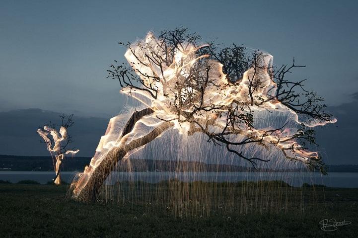 illuminated-tree
