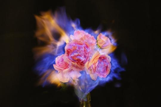 flower-on-fire