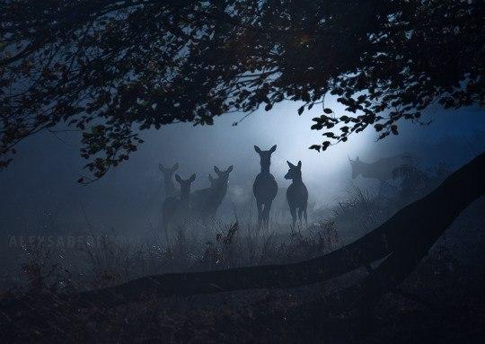 creepy-deer-in-forest
